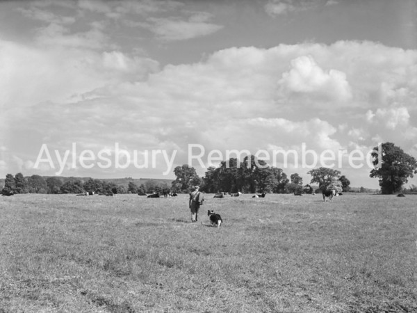 Fields near Bedgrove Farm, May 30 1958