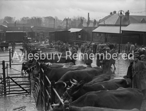 Cattle Market 1946