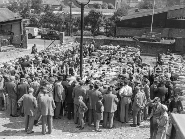 Sheep Fair at Cattle Market, Aug 27 1954