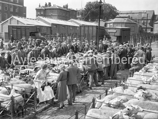 Sheep Fair, Aug 27 1954