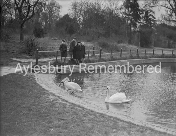 Swans in Walton Pond, Mar 1952