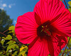 Backlit blossom
