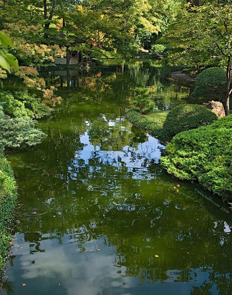 Japanese Garden Ft Worth