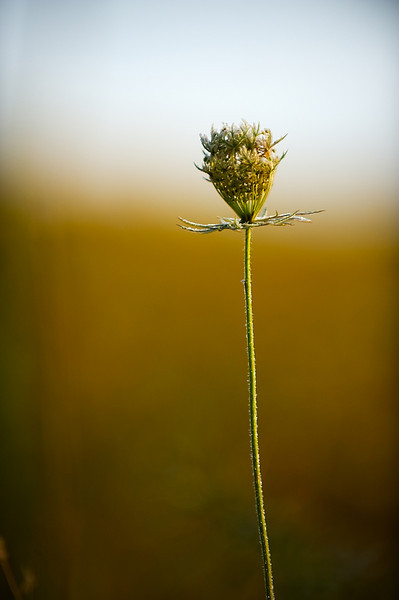 Morning weed