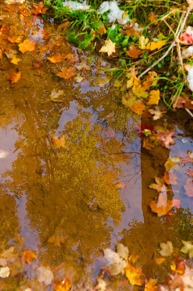 Reflections in a puddle 2