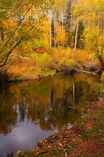Autumns here