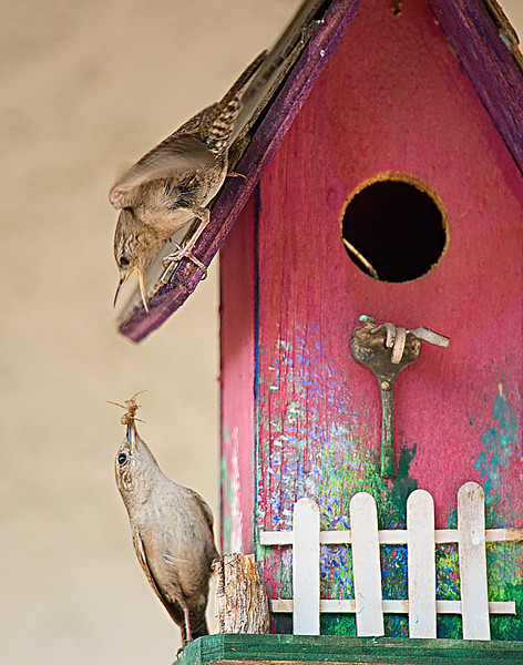 Two feeders