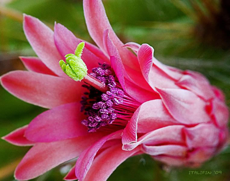 Donnas cactus