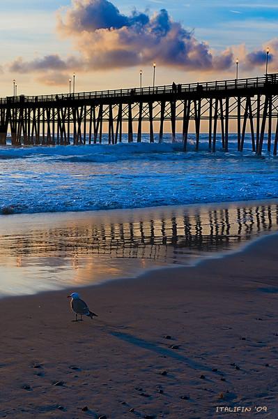 Seagull sunset 2