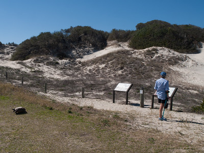 Lesley at Nana Dunes, with resident Gopher Tortoise