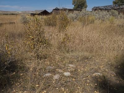 Surface anomaly near Bertram homestead