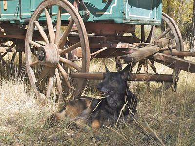 Wagon guard