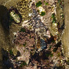 Tide pool, Windansea Beach, La Jolla, CA, March 2009