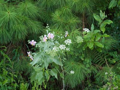 Wildflowers in Morris Landing Preserve