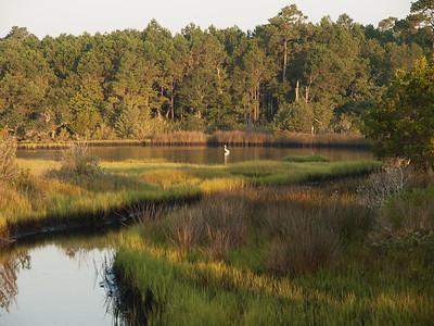Egret in marsh at Morris Landing