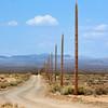 Desert Perspective