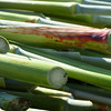 close-up of stalks ready to be juiced