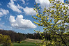 Three yellows and a view.<br /> (Left to right, a weeping willow, a forsythia (small), and a magnolia.)<br /> <br /> DP125-2013  Posted May 5; processed ditto.<br /> .<br /> Hidden Lake Gardens, Lenawee County, Michigan<br /> May 3, 2013<br /> <br /> Thanks to those faithful commenters who found my May 4 post of 'Three magnolias and a gazebo' and commented even though I was AWOL from the commenters corps yesterday.  I'm afraid I won't be able to comment again today until late, but hope to catch up with all the great posts for the weekend by this evening.