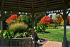 D277-2012 What a view!<br /> Sugar maples draw the eye from nearly anywhere in the Gardens at this time of year.  Here the gazebo in the Demonstration Garden provides the frames.<br /> .<br /> Hidden Lake Gardens, Lenawee County, Michigan<br /> October 4, 2012