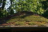 Detail of the 'green' roof of a trailhead interpretive gazebo, on which various plants are growing, planted there deliberatrely.<br /> .<br /> Matthaei Botanical Gardens, Ann Arbor, Michigan.<br /> August 7, 2012.<br /> (nex5n)