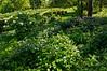 D128-2012 Peony Garden<br /> <br /> Nichols Arboretum, Ann Arbor, Michigan<br /> May 8, 2012<br /> (nex5n)