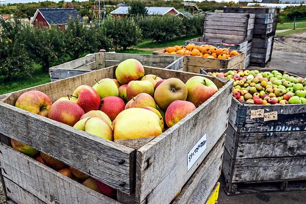 2013 Spicer Orchards Visit