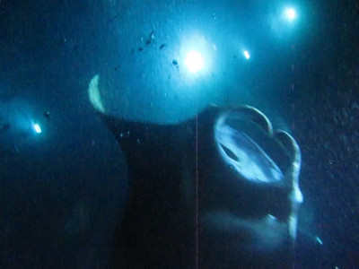 Video of snorkeling at night with the incredible, massive Manta Rays off the Kona coast of the Big Island of Hawaii.  These are up to 16 feet in wingspan and well over 1000 pounds, and were inches away from us, feeding on the plankton that was drawn to the lights.  Note the elbow of another snorkeler in the upper left part way through the video.