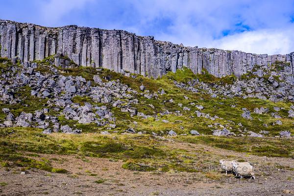 3 Basalt and sheep!
