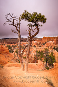 Bryce Canyon Growth
