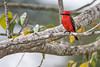 Crooked Tree Wildlife Sanctuary, Belize