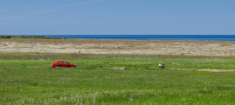 Sunny Day, Newfoundland