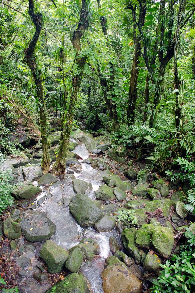 Stream below La Coca Falls