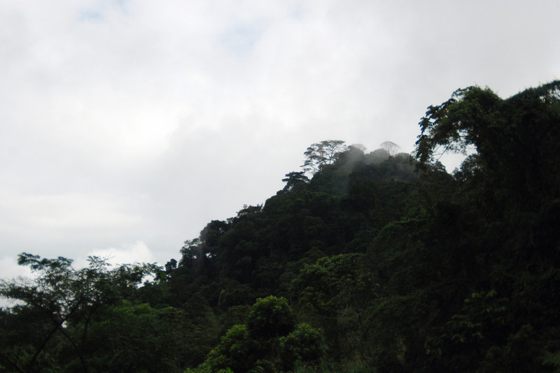 Rainforest in Costa Rica