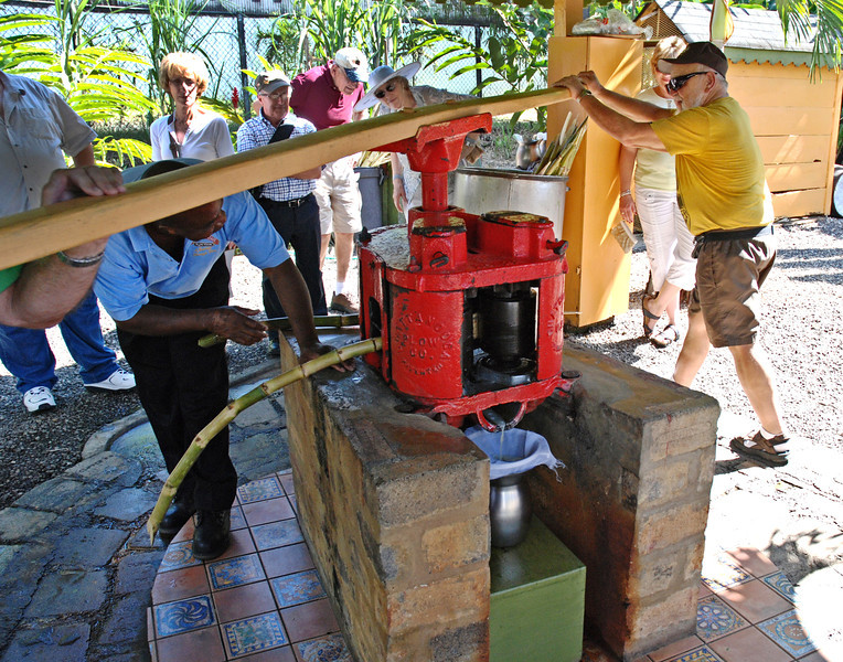 Crushing the sugar cane at the rum factory in Jamaica, December 7, 2011