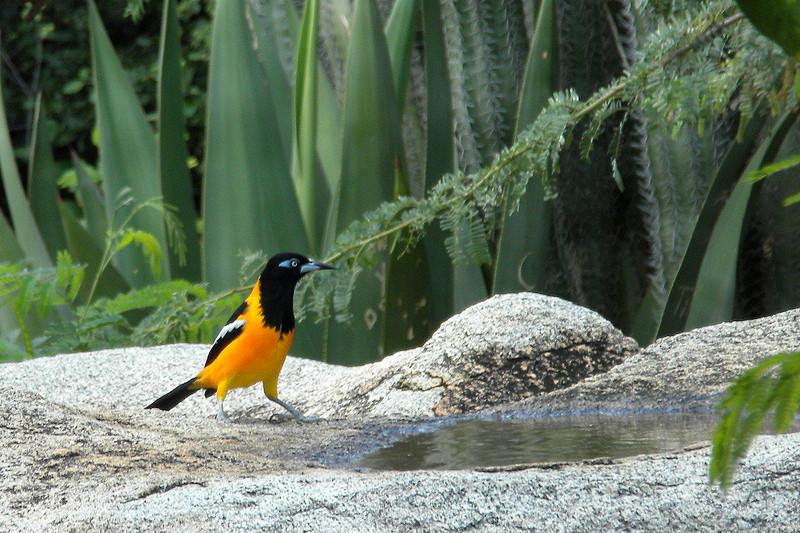 Colorful bird at the Natural Bridge