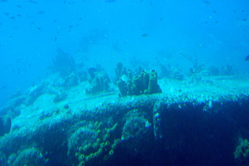 "The ""Antilla"" Shipwreck - This 400-foot ship was sunk during World War II and is now home to many kinds of exotic sea life."