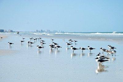 Seagulls along the shoreline