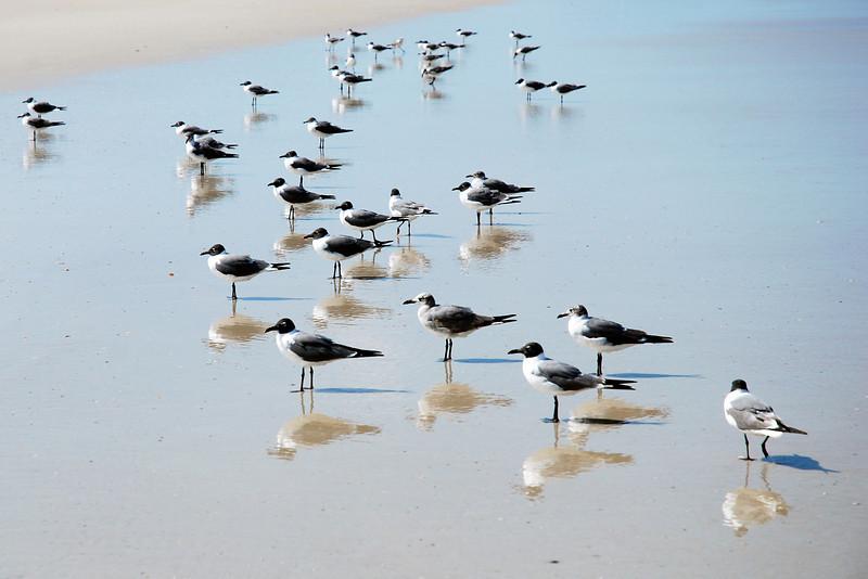 Seagulls along the shoreline