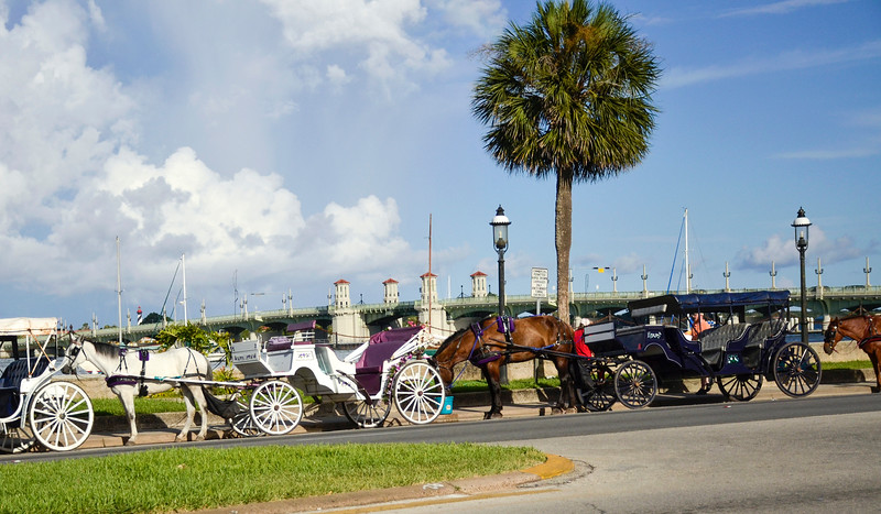 Carriage horses and drivers along the Matanza Bay