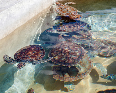 Sea turtle farm - Their shells are absolutely beautiful.