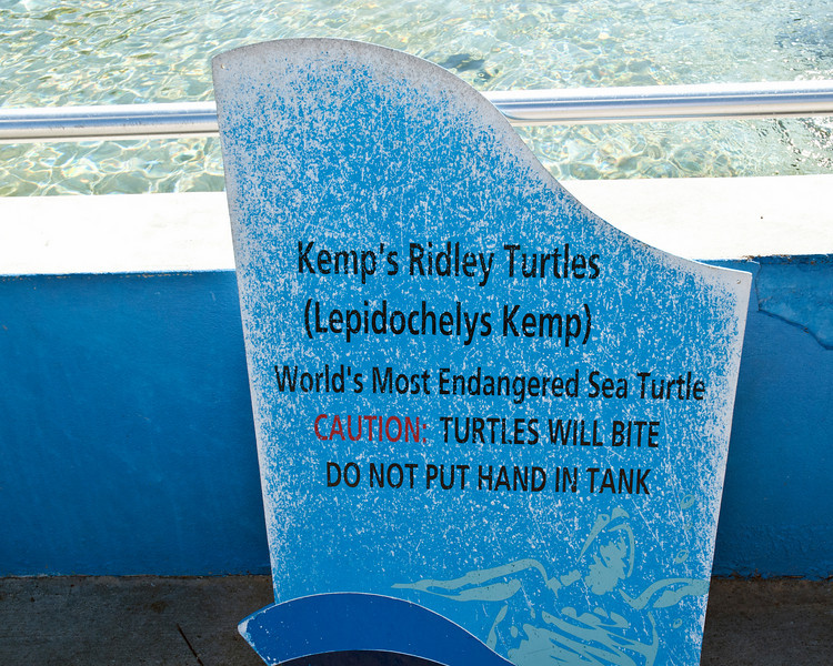 There were several species of sea turtles at the Turtle farm.