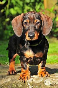 Lea, the new puppy in Neustadt