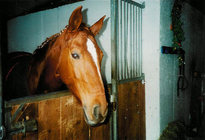 At the stable where I go horseriding