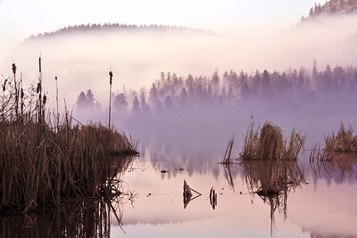 One Misty Vaseux Lake Morning