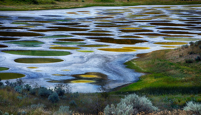 Spotted Lake 2016