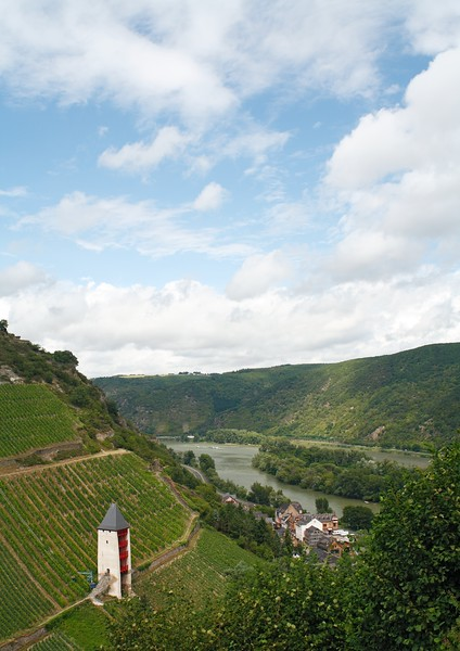 Vineyards of Bacharach on the Rhine river in Germany.