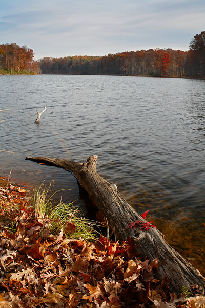 Fall colors at Seneca Creek State Park, Germantown, Maryland, USA.
