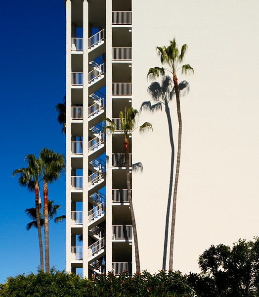 Palm trees against sun lit white wall with stairs. Town and Country resort, San Diego, California