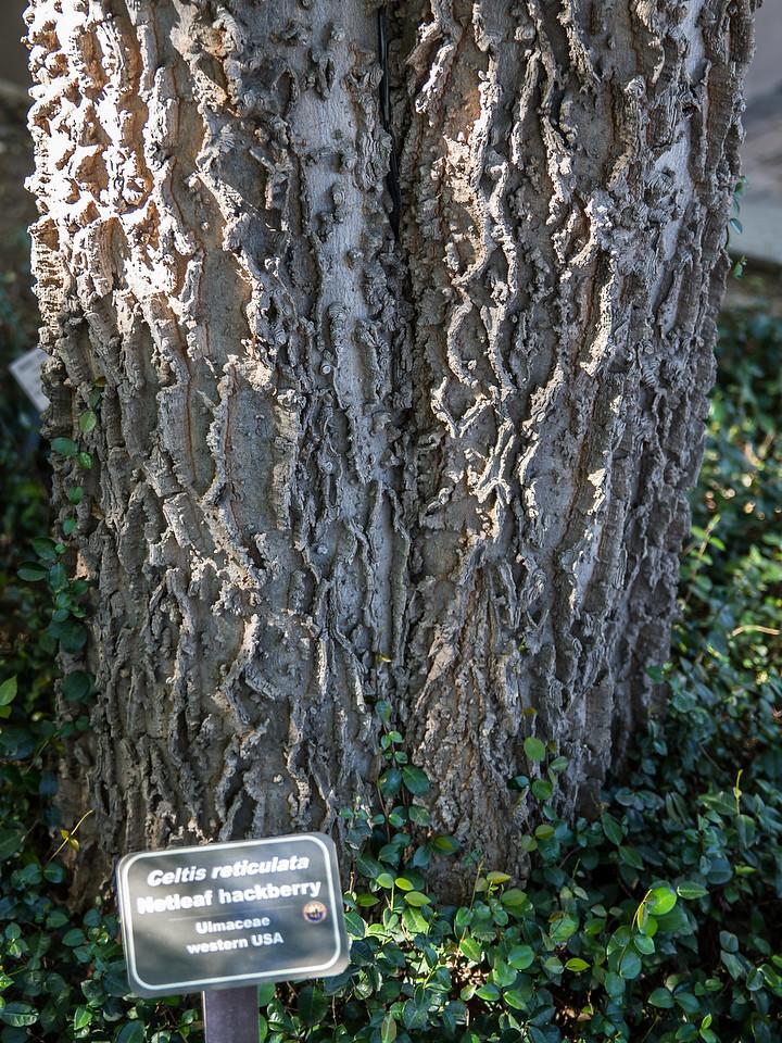 Really interesting bark