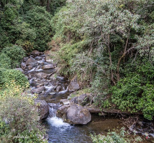 Stream by the El Trogon Lodge.